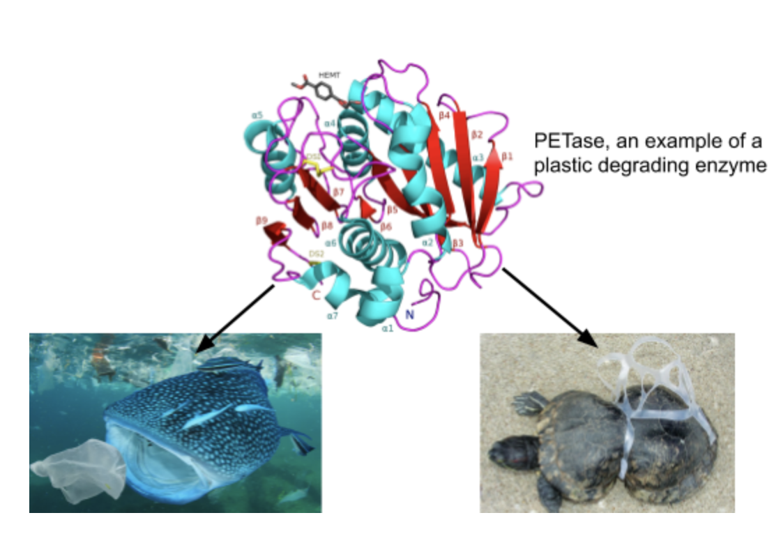 A New Biological and Financial Ecosystem for Plastic